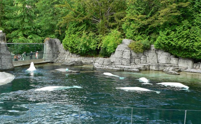 Vancouver_Aquarium