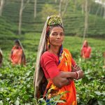 Passer un séjour culturel en Inde