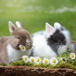Pourquoi acheter une maison pour votre lapin