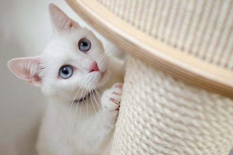 Pourquoi un chat peut devenir agressif