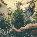 Comment concevoir un petit jardin urbain
